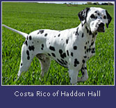 costa-rico-haddon-hall2.jpg