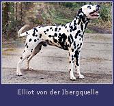 elliot_ibergquelle2.jpg