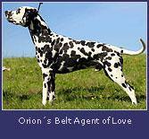 orions-belt-agent-of-love2.jpg