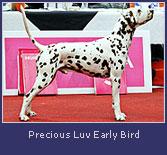 precious-luv-early-bird2.jpg