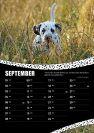CDF-Fotokalender-2016_verkleinert-09.jpg