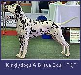 Kinglydogs-A-Brave-Soul2.jpg