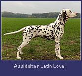 assiduitas-latin-lover2.jpg